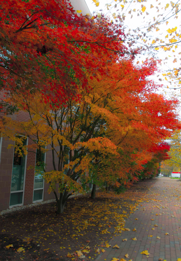 Fall ColorNCSU
